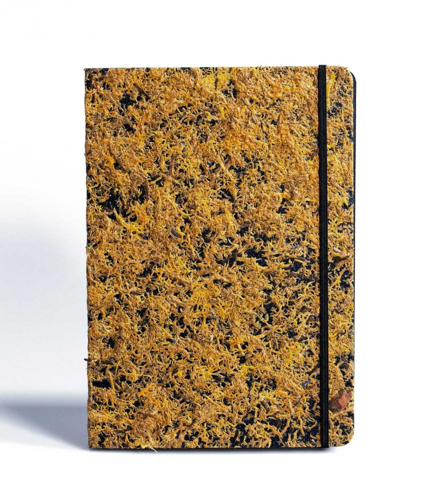 PureBooks. Moas Orange